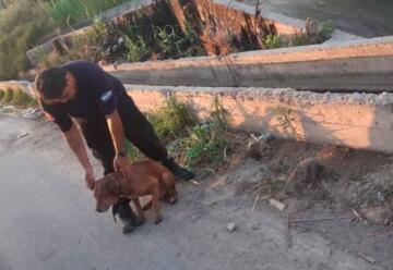 Tres bomberos se arrojaron a un canal para salvar a un perro