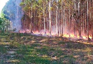 La actividad de bomberos y el medio ambiente