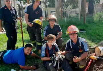 Bomberos rescataron a un perrito que cayó en un caño