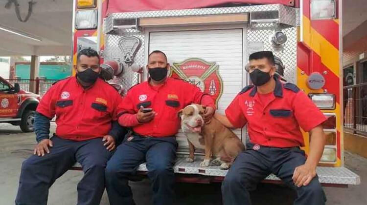 Integran a sus filas a pitbull rescatado de peleas clandestinas