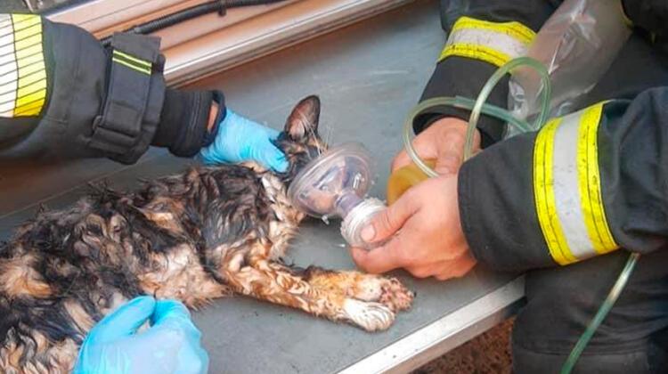 Bomberos rescatan de incendio a un gato y le salvan la vida