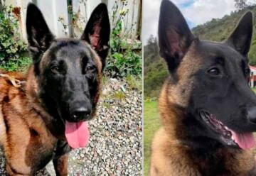 Apareció el perro del Cuerpo de Bomberos de Bogotá que se había perdido
